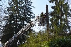 Rušenje bolesnih stabala spomen park
