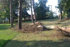 Uklanjanje bolesnih stabala