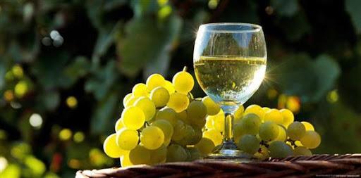 Prikupljanje uzoraka za ocjenjivanje vina